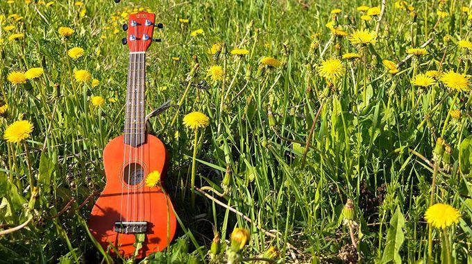 楽器を習いたい、おすすめの楽器、簡単に弾ける楽器・ギターとの比較【ウクレレ編】