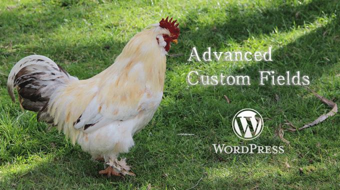 ショートコードを使って【Advanced Custom Fields】で出力したページをほかのページにも使いたい!